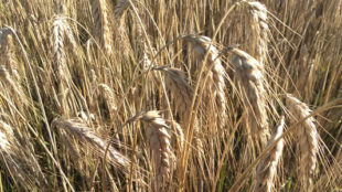 wyniki sektora rolniczego 2018